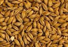 Aromatic malt from Bamberg, Germany. Promotes a full flavour and rounds off beer colour. Promotes deep red colour and malty flavour.  Can make up to 15% of the grain bill.  (EBC 50)