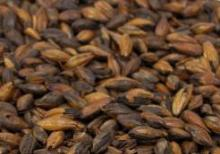 A single batch quantity for use in conjunction with your favourite kits.  Adds warm, nutty, chocolate flavours. Use in moderation to add a slight brown colour to your beer or in larger quantities to add dark chocolate flavour to Porters, Stouts and Dark Lagers.  Can make up to 10% of the grain bill.  (EBC 1100)